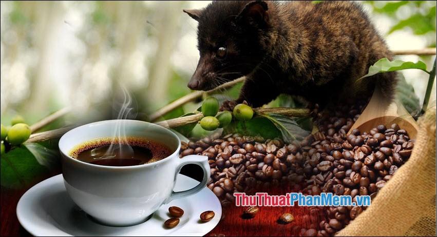 Cá phê chồn