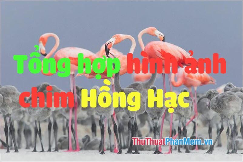Tổng hợp hình ảnh chim Hồng Hạc