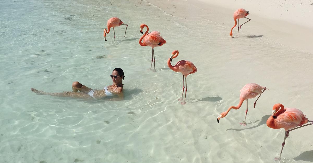 Bãi biển chim hồng hạc hình ảnh đẹp nhất