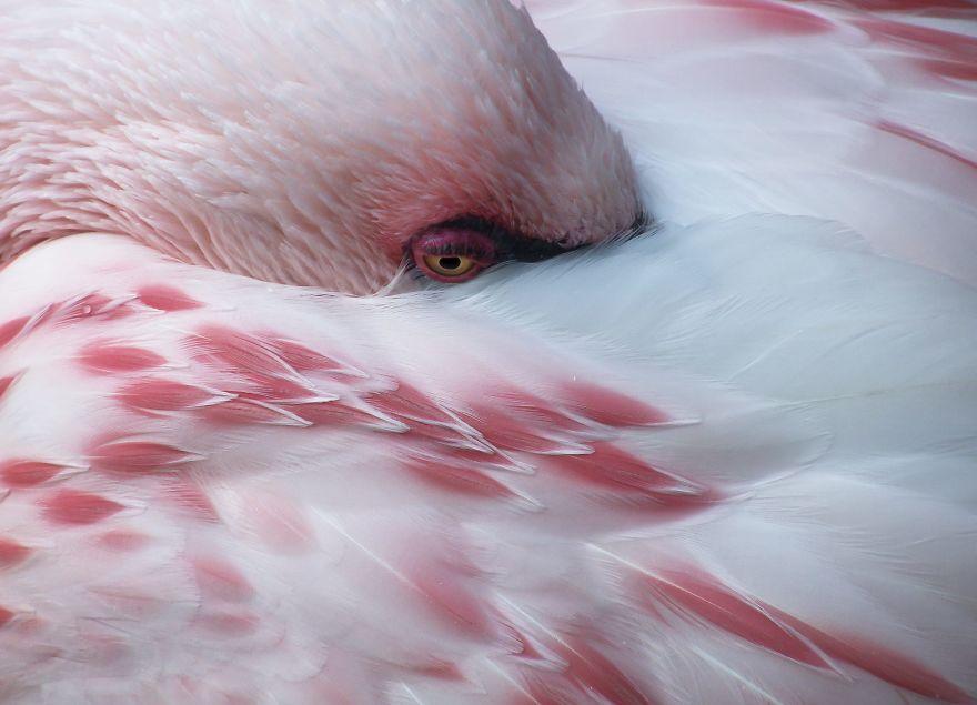 Chiêm ngưỡng những hình ảnh về chim hồng hạc đẹp nhất