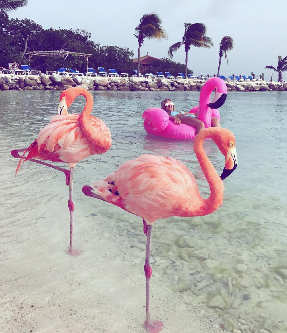 Chiêm ngưỡng vẻ đẹp tuyệt trần của chim hồng hạc