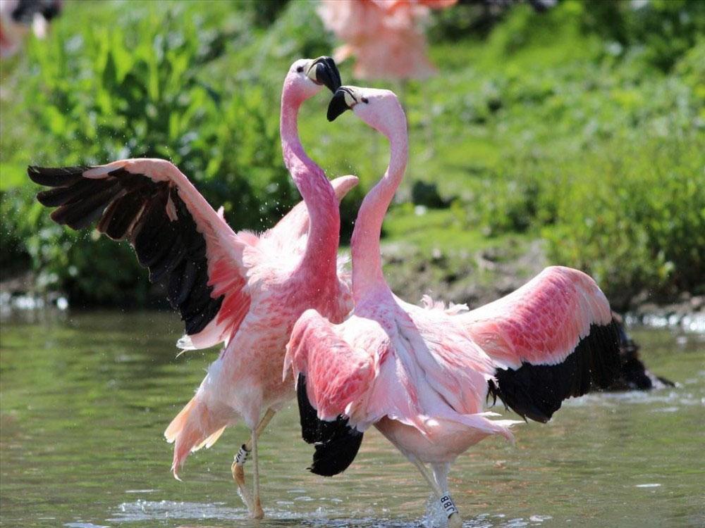 Chim hồng hạc ăn gì