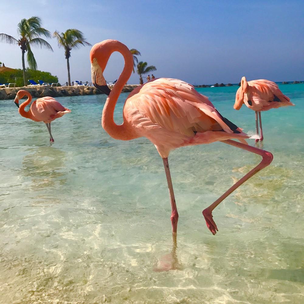 Chim hồng hạc di cư đi đâu hình ảnh đẹp nhất