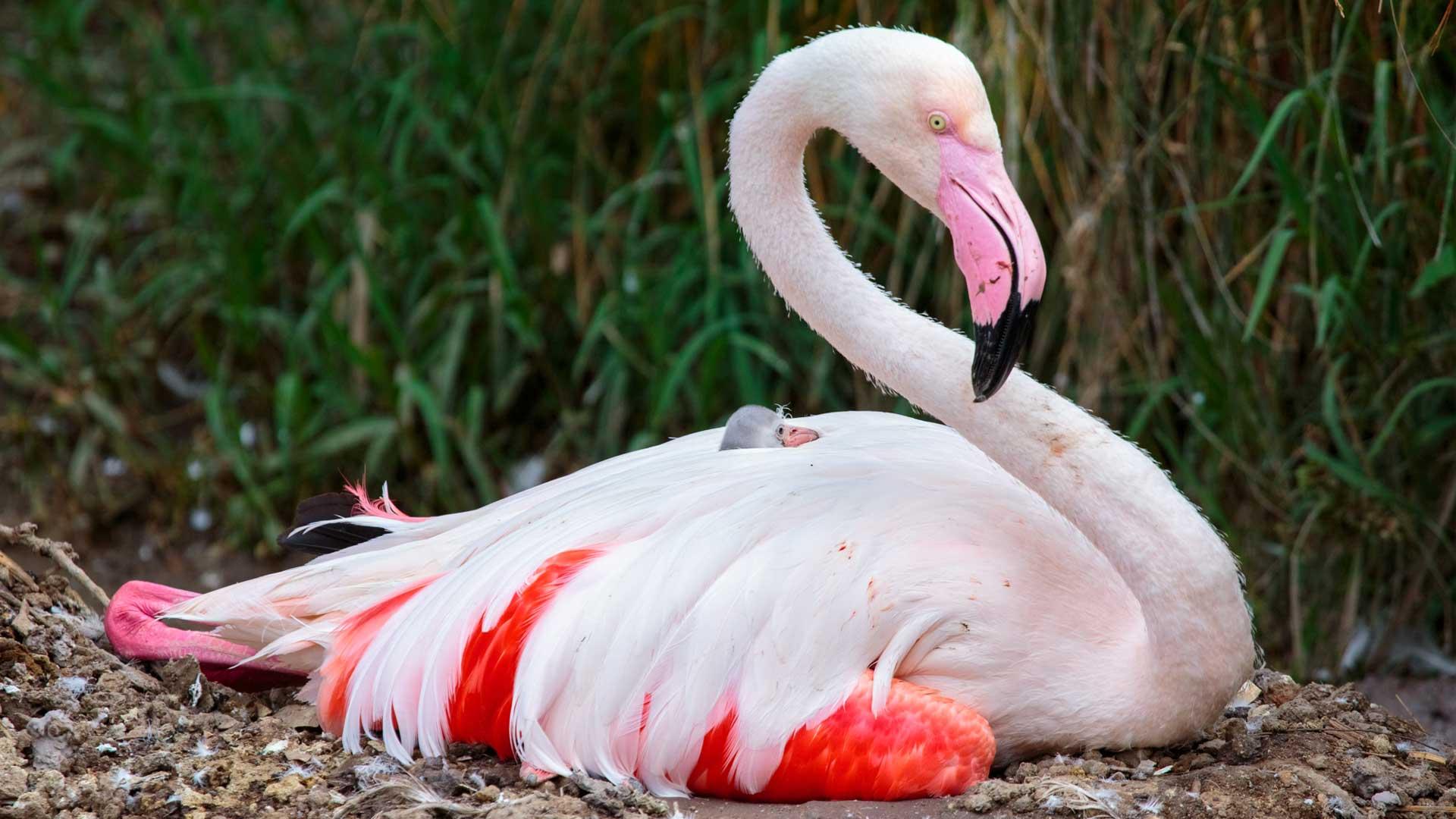 Chim hồng hạc sống ở đâu hình ảnh đẹp nhất