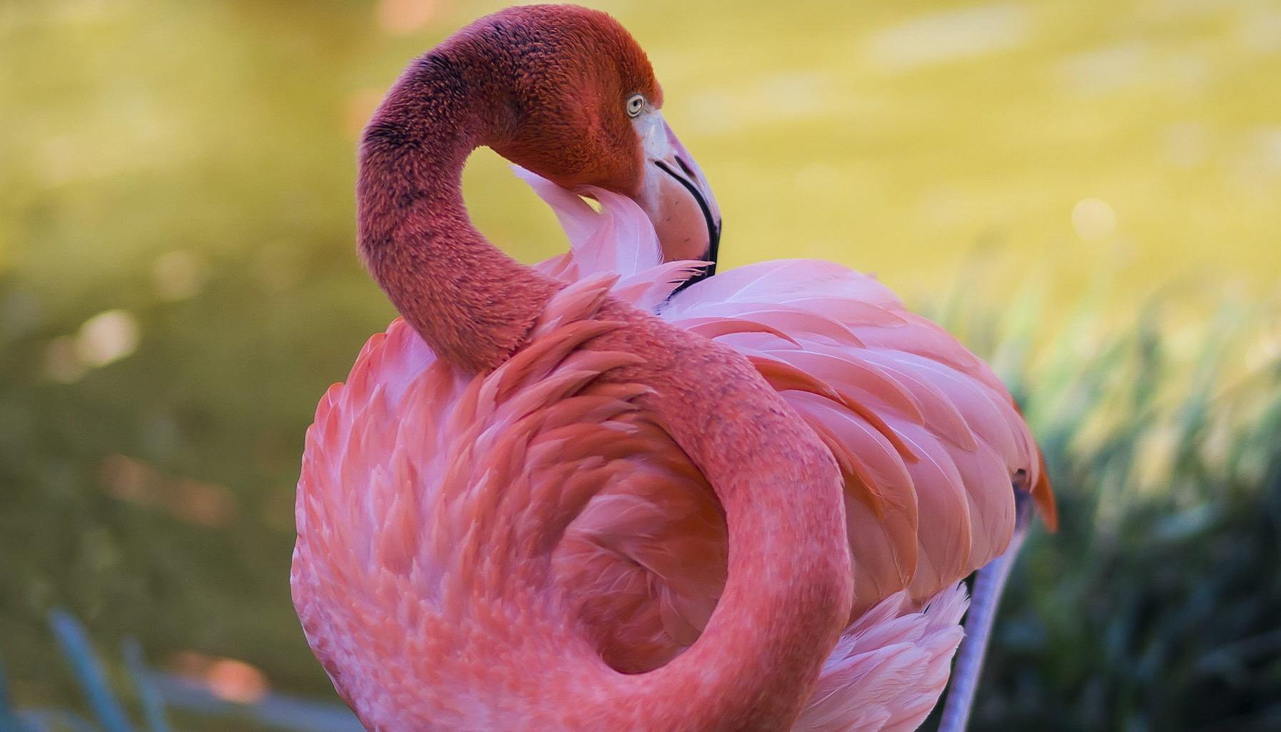 Chim hồng hạc tượng trưng cho điều gì