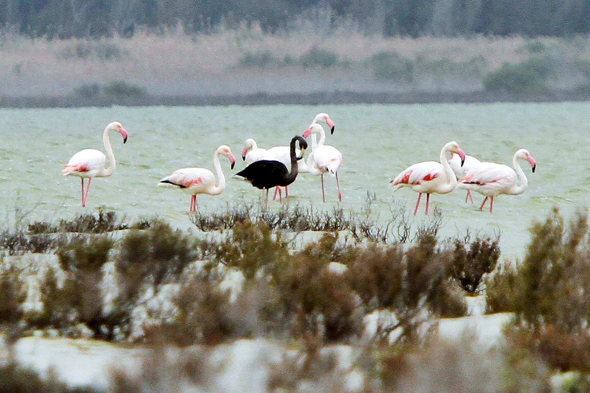 Hình ảnh chim hồng hạc săn mồi hình ảnh đẹp nhất