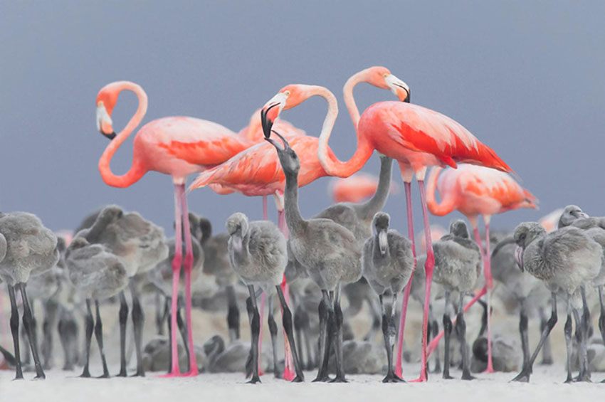 Hình ảnh đẹp nhất về cuộc sống của chim hồng hạc