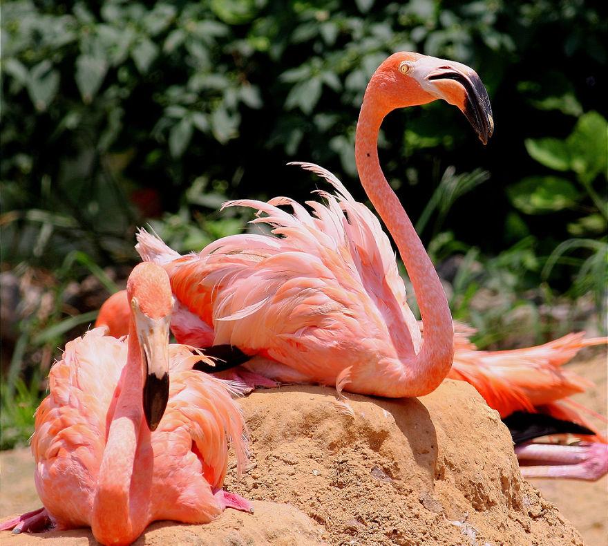 Hình ảnh những chú chim hồng hạc màu hồng đẹp nhất