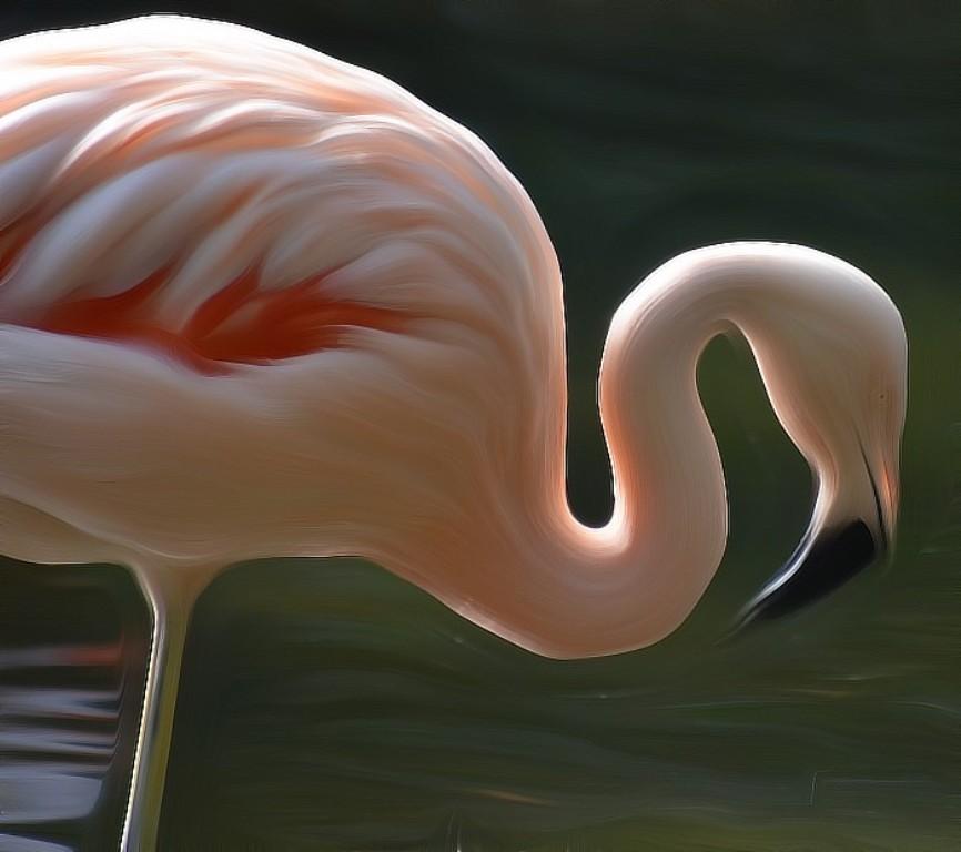 Hình ảnh quán chim hồng hạc ở đà nẵng