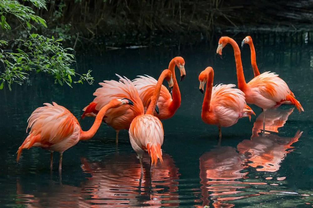Hình ảnh tổ chim hồng hạc đẹp nhất