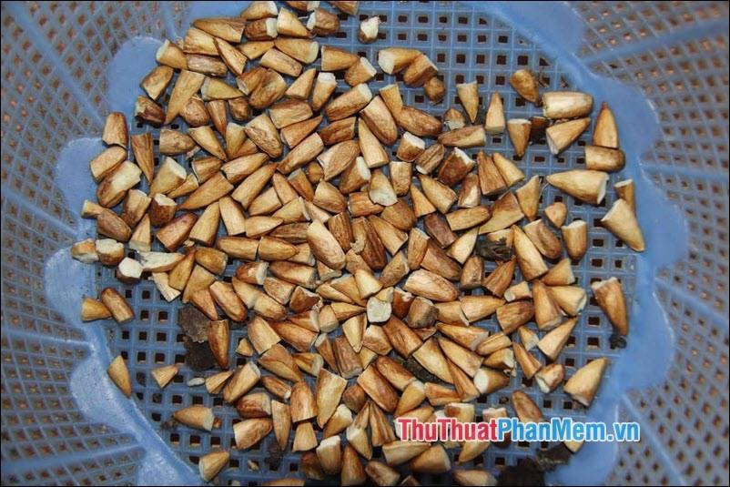 Mứt hạt bàng