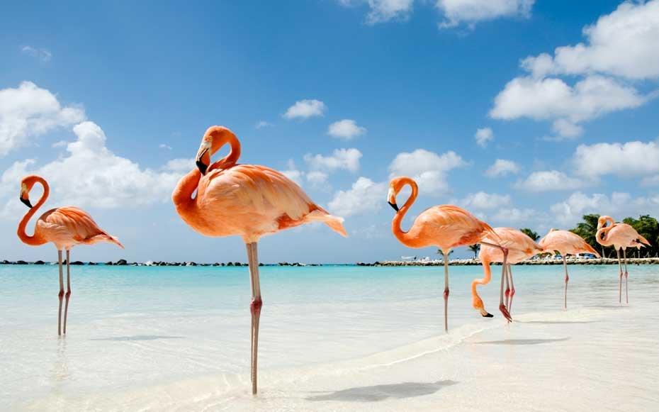 Nằm mơ thấy chim hồng hạc là điềm gì