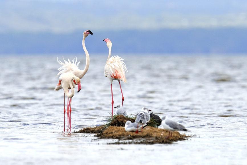Những hình ảnh chim hồng hạc đẹp nhất