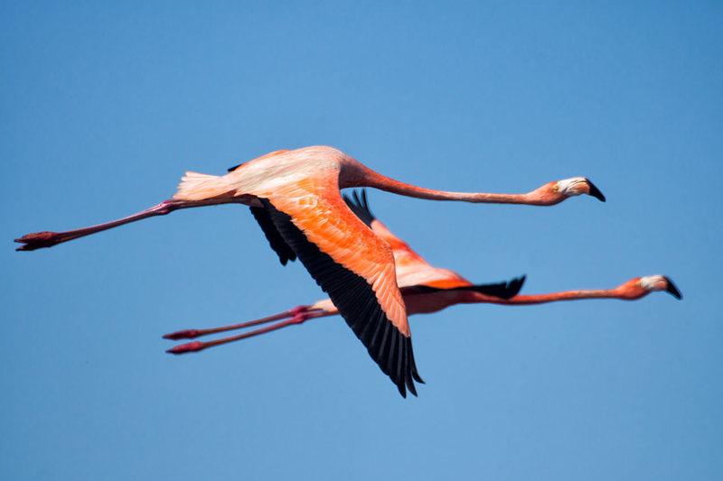 Những hình ảnh đẹp nhất khi chim hồng hạc đẹp nhất