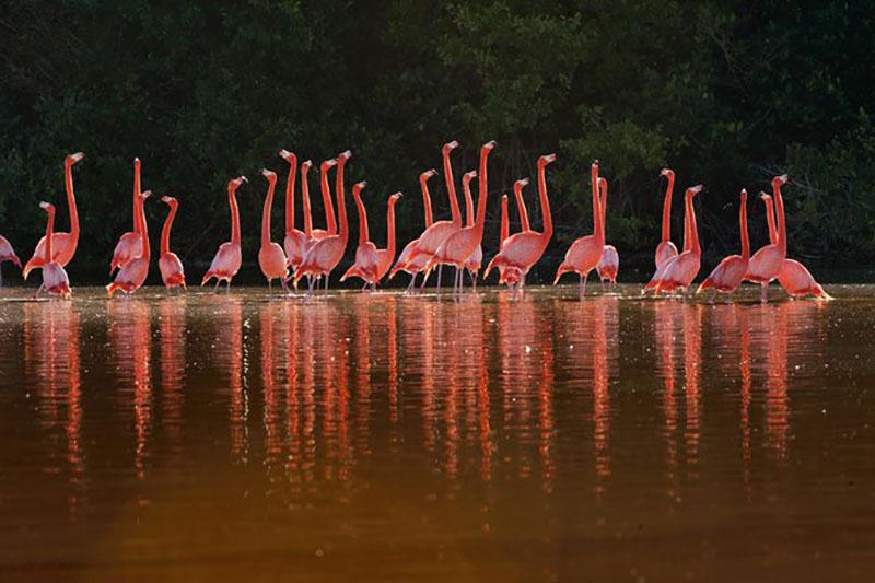 Những hình ảnh đẹp về chim hồng hạc