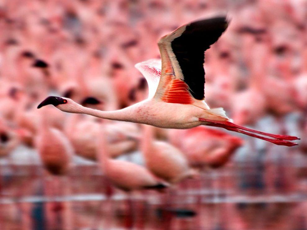 Tattoo chim hồng hạc đẹp nhất