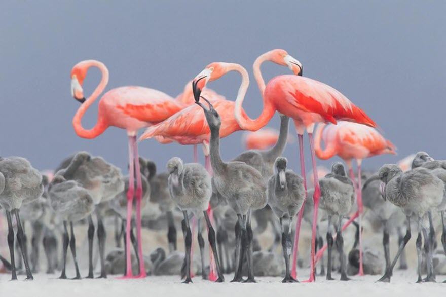 Tổng hợp hình ảnh chim Hồng Hạc đẹp nhất