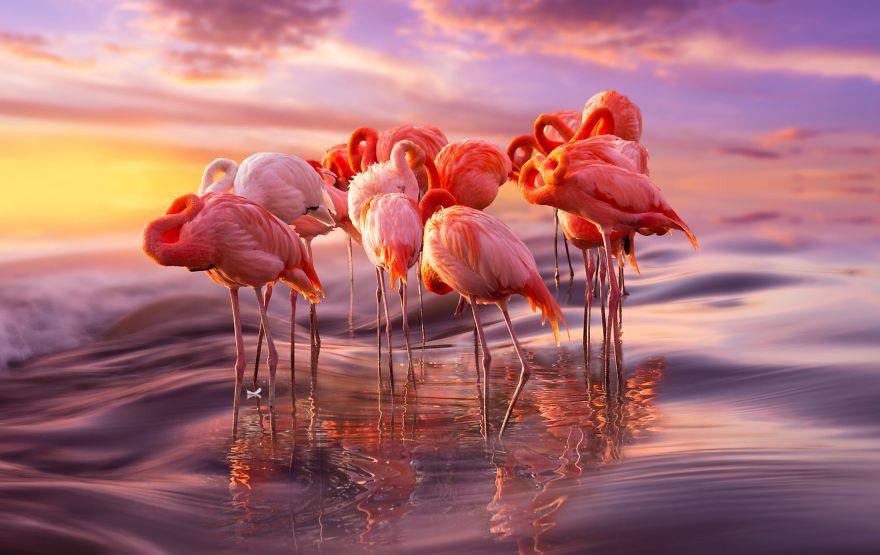 Ý nghĩa hình xăm chim hồng hạc