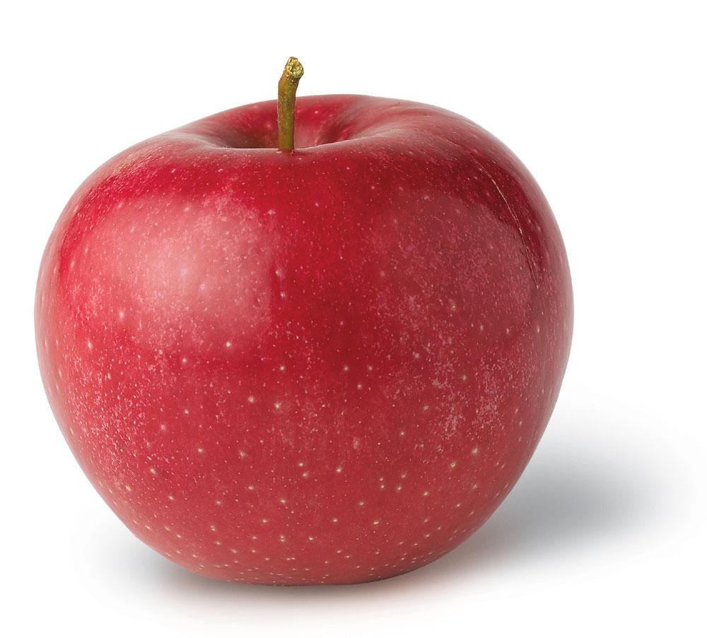 Ảnh quả táo đẹp nhất