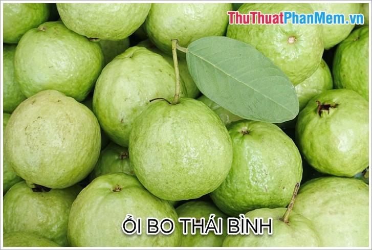 Ổi Bo Thái Bình