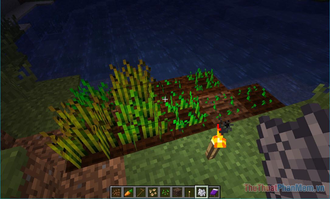 trồng lúa mì minecraft