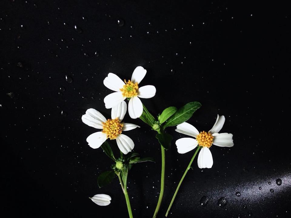Hình ảnh hoa xuyến chi đẹp và dễ thương nhất