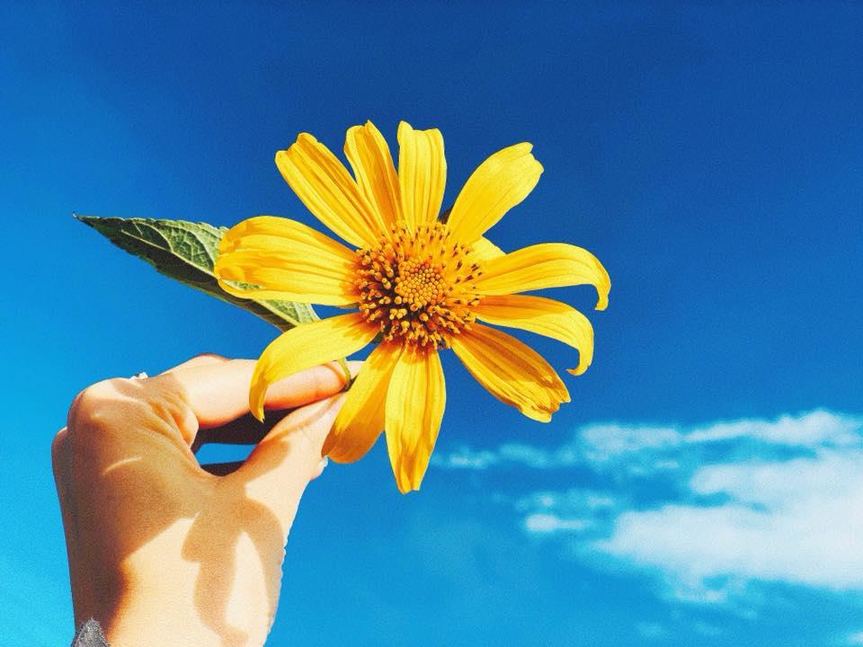 Hình ảnh  hoa xuyến chi màu vàng ấn tượng và đẹp nhất