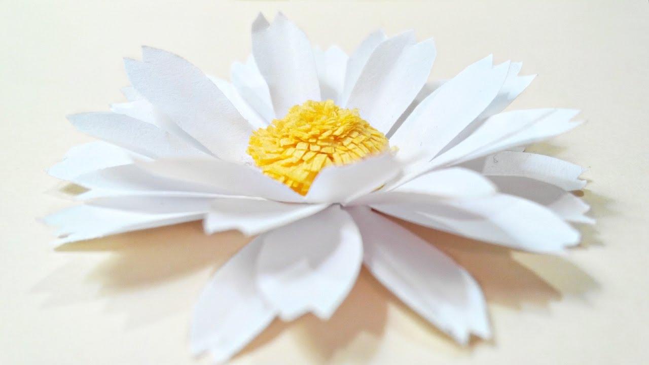 Hình ảnh hoa xuyến chi nở đẹp nhất