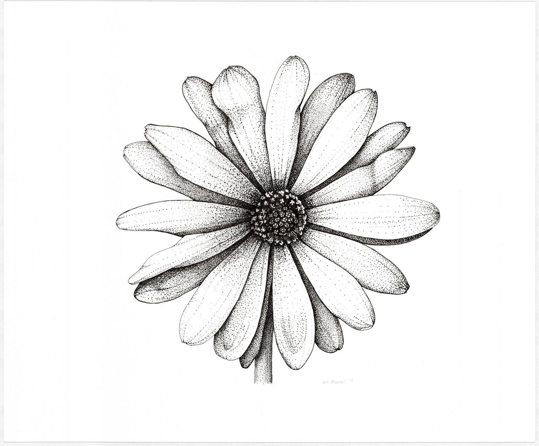 Hình vẽ đẹp nhất về hoa xuyến chi