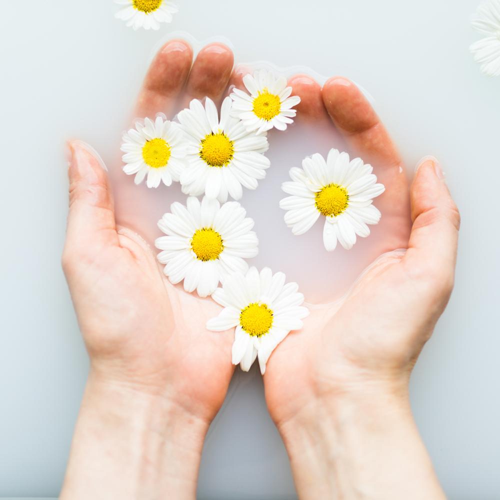 Hoa xuyến chi hình ảnh đẹp nhất