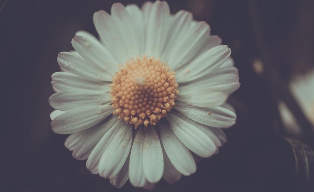 Những hình ảnh đẹp nhất về hoa xuyến chi