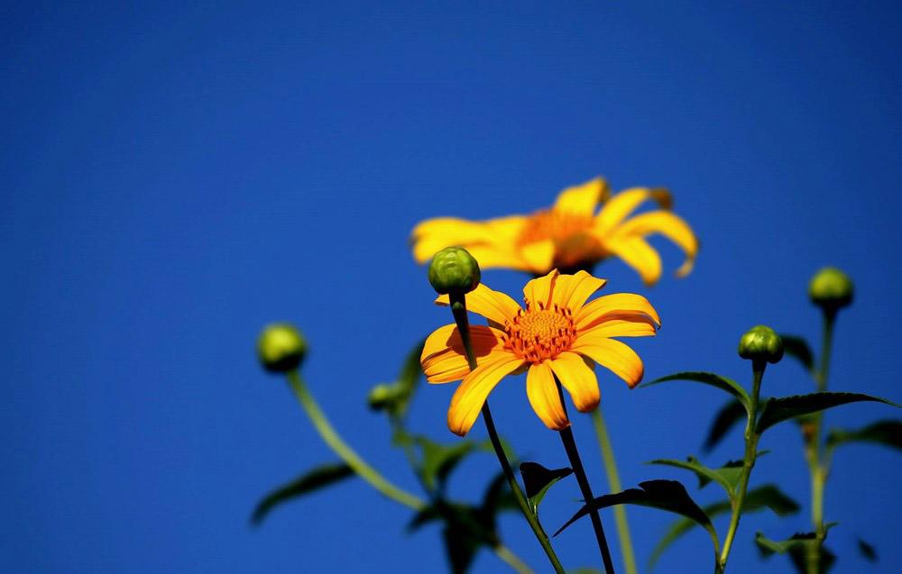 Những hình ảnh hoa xuyến chi đẹp và ấn tượng nhất