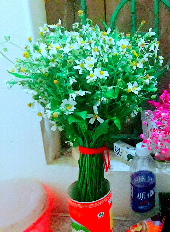 Những hình ảnh hoa Xuyến chi màu trắng đẹp nhất