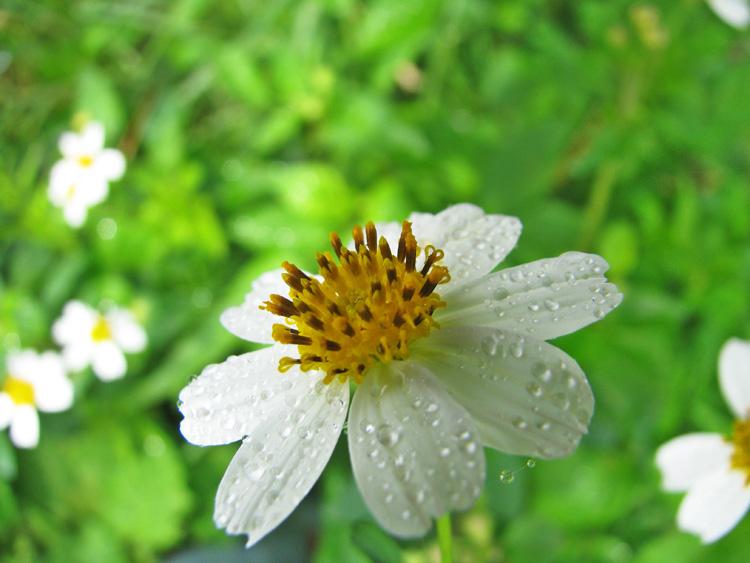 Sưu tầm những hình ảnh hoa xuyến chi đẹp và dễ thương nhất