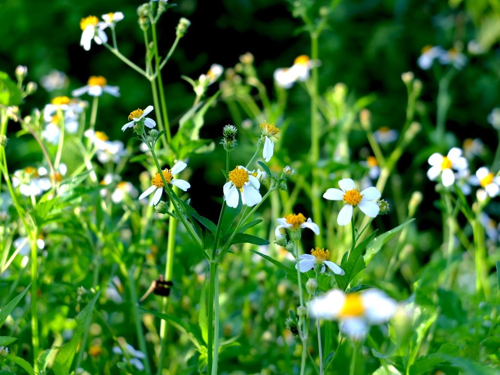 Tổng hợp những hình ảnh hoa xuyến chi đẹp nhất