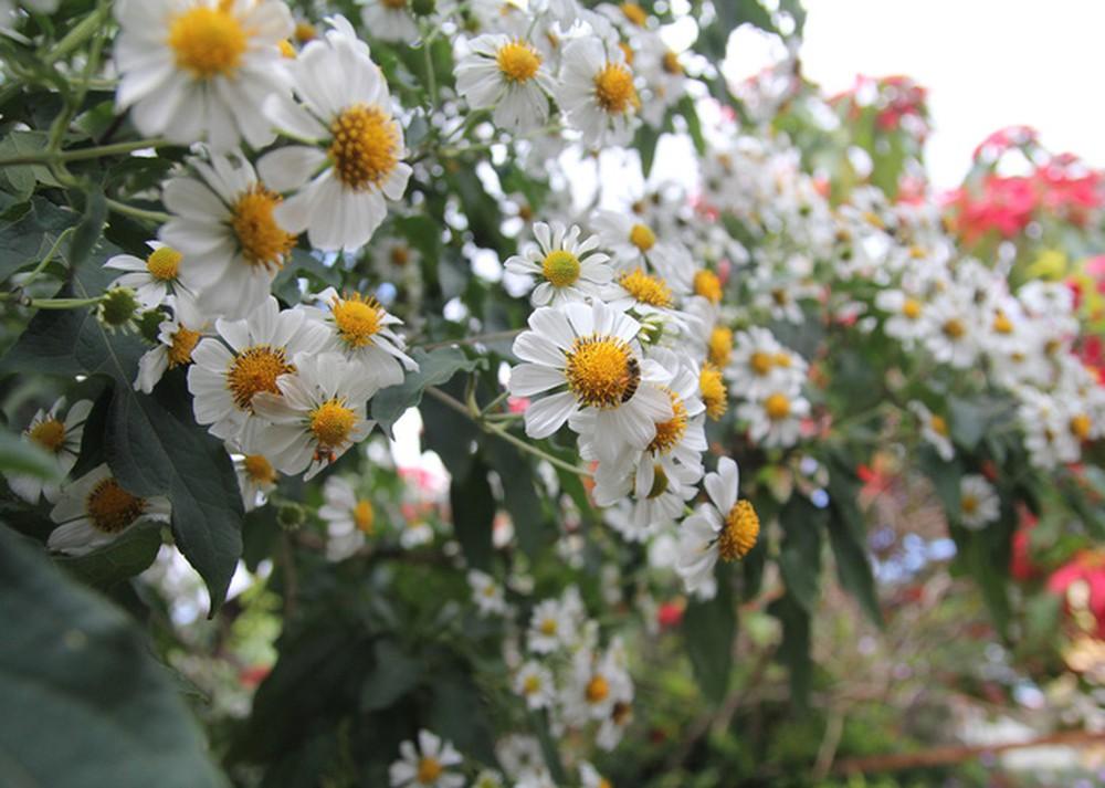 Tổng hợp những hoa xuyến chi đẹp nhất