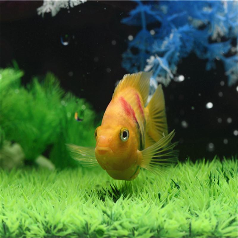 Ảnh đẹp về cá cảnh