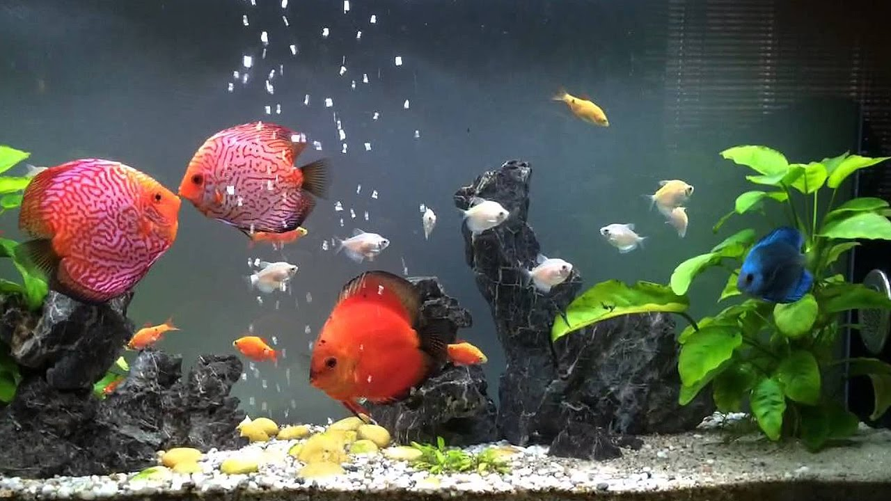 Ảnh đẹp về những chú cá cảnh