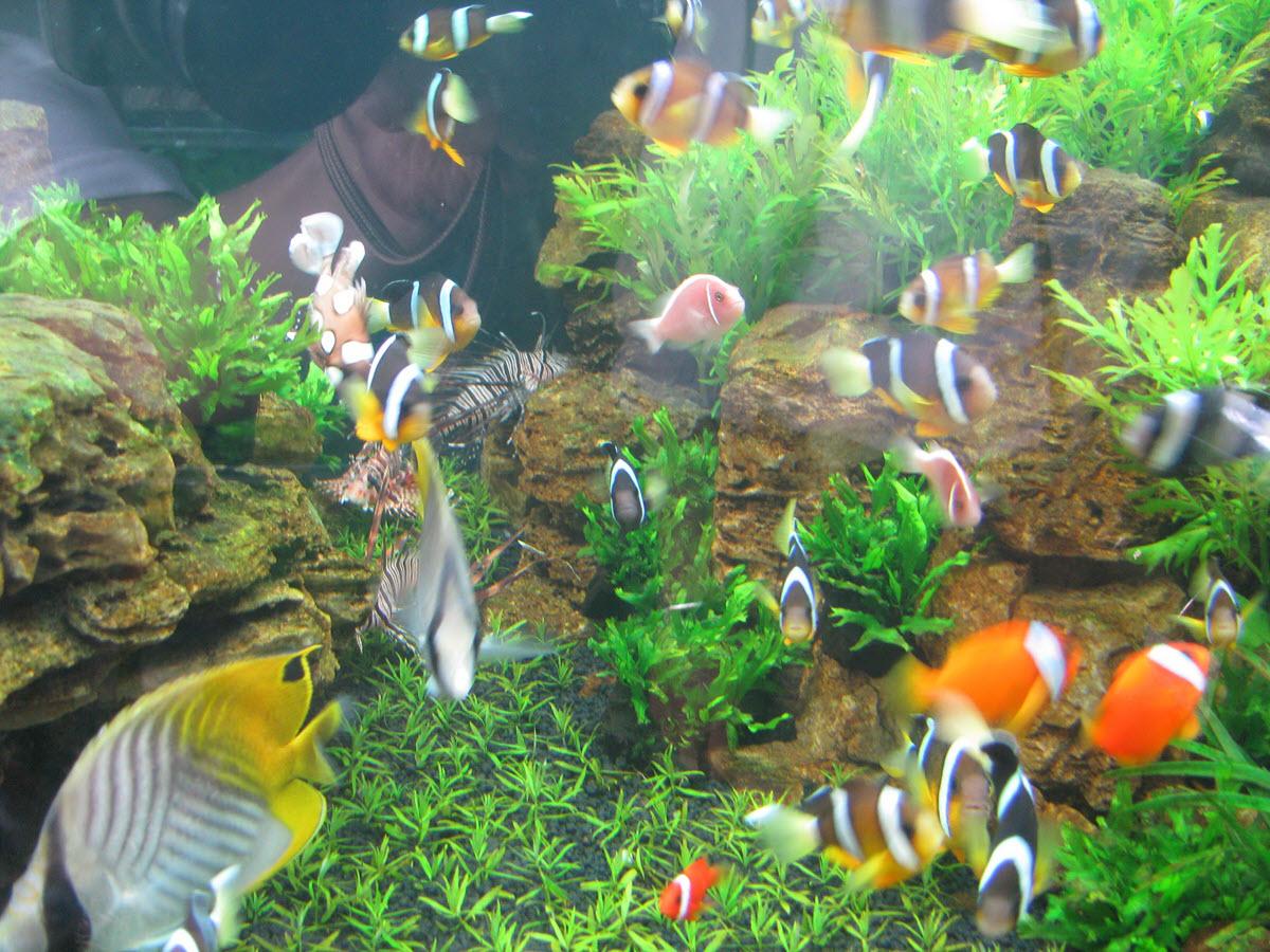 Hình ảnh bể cá cảnh độc đáo và phong phú