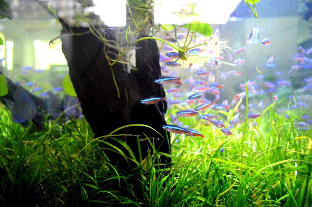 Hình ảnh bể cá thuỷ sinh đẹp