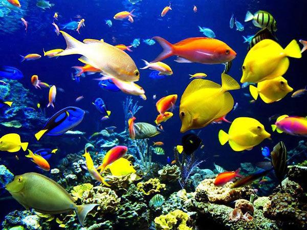 Hình ảnh cá cảnh đẹp trong bể