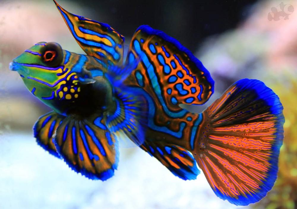 Hình ảnh cá cảnh đẹp và độc, lạ