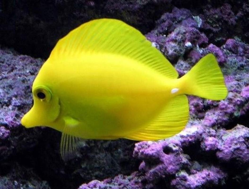 Hình ảnh cá cảnh đẹp và độc
