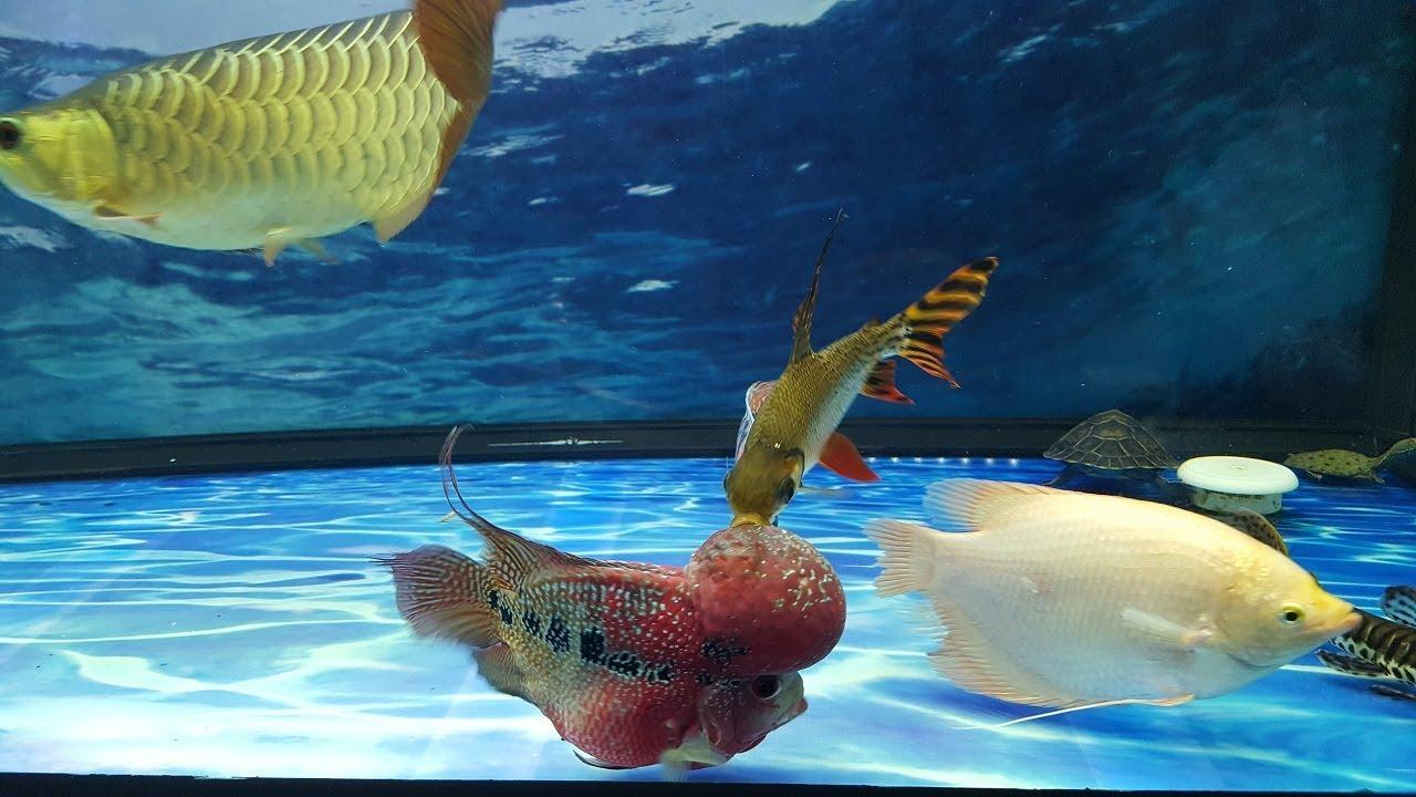 Hình ảnh đẹp trong bể cá cảnh