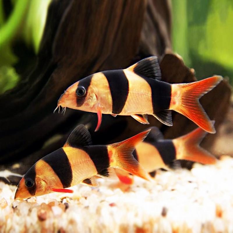 Hình ảnh những chú cá cảnh
