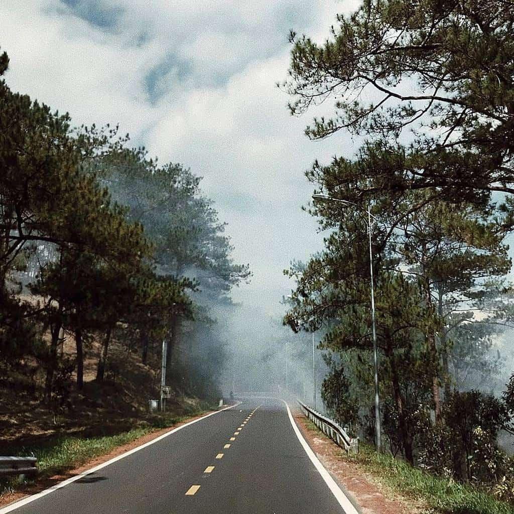 Con đường phượt Đà Lạt với sương mù vây quanh